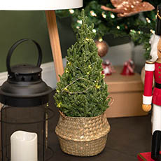 Tabletop Christmas Trees - Spruce Pine Potted Real Touch with LED Light Green(45cmH)