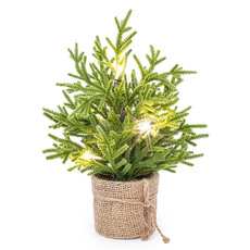 Tabletop Christmas Trees - Norway Spruce Pine Potted Real Touch with LED Green (33cmH)