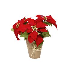 Poinsettia Potted 3 Flowers Red (27cmH)