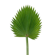 Artificial Leaves - Fan Palm Stem Green (92cmH)