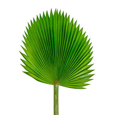 Artificial Leaves - Fan Palm Stem Green (116cmH)
