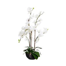Phalaenopsis Orchid Potted in Ceramic Pot White (78cmH)