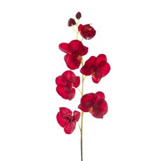 Phalaenopsis Orchid Spray 7 flowers Red (70cmH)