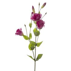 Lisianthus Spray Hot Pink (89cmH)