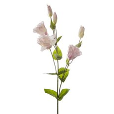 Lisianthus Spray Light Pink (89cmH)