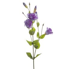 Lisianthus Spray Purple (89cmH)