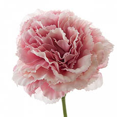 Artificial Carnation - Carnation Ruffle Stem Light Pink (42cmH)