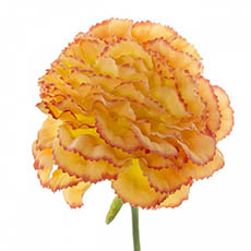 Artificial Carnation - Carnation Ruffle Stem Orange (42cmH)