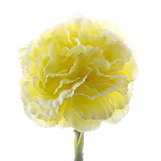 Artificial Carnation - Carnation Ruffle Stem Yellow (42cmH)