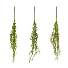 Hanging Sedum Bush 3PC Bag Green (56cmH)