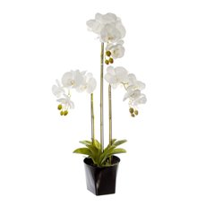 Artificial Orchids - Phalaenopsis Orchid Potted Real Touch 17 Flowers White(75cm)