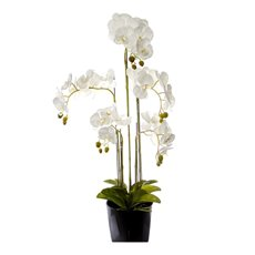 Artificial Orchids - Phalaenopsis Orchid Potted Real Touch 33 Flowers White(90cm)