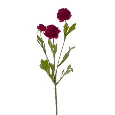 Other Flowers - Petite Ranunculus Spray Fuchsia (42cmH)