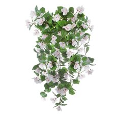 Hanging Bougainvillea Bush White (86cm)