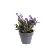 Lavender Plant Potted Purple (18cmH)
