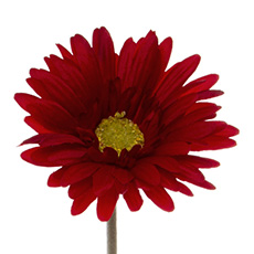 Artificial Gerberas - Gerbera Aztec Red (54cm)