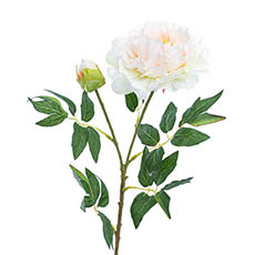 Artificial Peonies - Evelyn Peony Spray Champagne (70cmH)