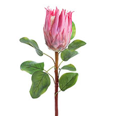 Australian & Native Flowers - Native Protea Pink (68cmH)