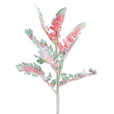 Artificial Leaves - Dusty Miller Red Green (38cmH)