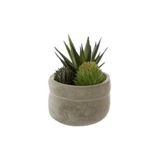 Artificial Succulents - Artificial Succulent Mini Mixed Aloe Cement Pot Green (9cmH)