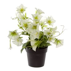 Artificial Plants - Artificial Petite Petunia Plant Potted White (29cmH)