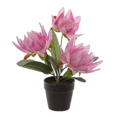 Artificial Plants - Artificial Petite Water Lily Plant Potted Pink (22cmH)