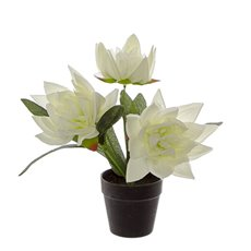 Artificial Plants - Artificial Petite Water Lily Plant Potted White (22cmH)