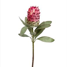 Native Protea Pink (66cmH)
