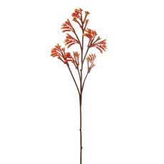 Australian & Native Flowers - Australian Native Kangaroo Paw Spray Orange (78cmH)