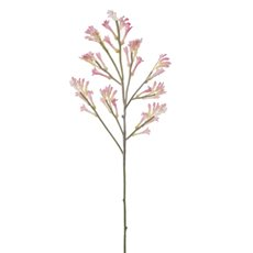 Australian Native Kangaroo Paw Spray Pink (78cmH)