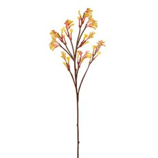 Kangaroo Paw Spray Yellow (78cmH)