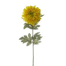 Chrysanthemum Large Disbud Yellow (90cmH)