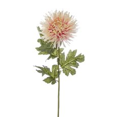 Other Flowers - Spider Chrysanthemum Light Pink (90cmH)