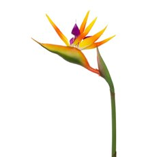 Tropical Flowers - Bird of Paradise Real Touch Orange (89cmH)