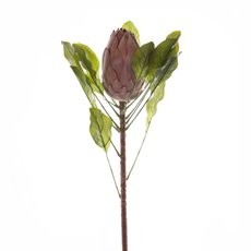 Australian Native Queen Protea Supreme Mauve (95cmST)
