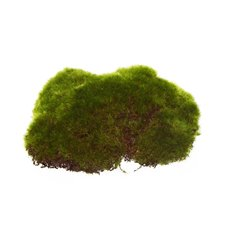 Moss Rocks Large 6 Pack Green (14cm)