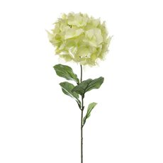 Giant Magic Hydrangea Green (23cmDx80cmH)