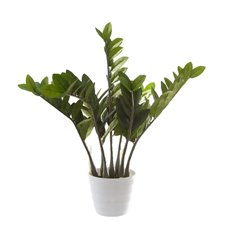 Artificial Plants - Artificial Zamifolia Potted Plant (70cmH)