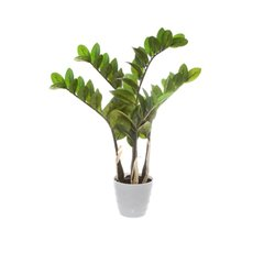 Zamifolia Potted Plant Green (60cmH)
