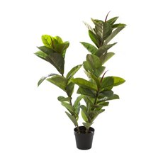 Rubber Plant Potted Green (130cmH)