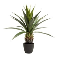 Agave Sisal Potted Plant Green (90cmH)