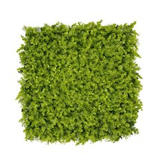 Greenery Walls - Artificial Boxwood Grass Wall Green (50x50cm)