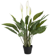 Artificial Plants - Artificial Spathiphyllum Plant Potted Green (96cm)
