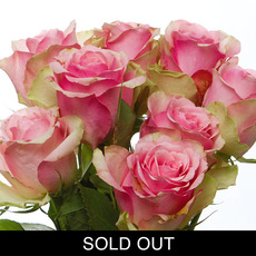Imported Platinum Fresh Rose Bunched 10 Belle Rose(50cm) VAL