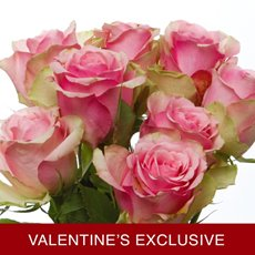 Imported Platinum Fresh Rose Bunched 10 Belle Rose(60cm) VAL