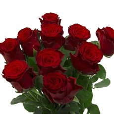 Imported Platinum Fresh Rose Bunch 10 Ever Red (60cm)