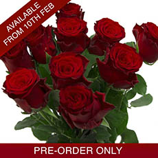 Imported Platinum Fresh Rose Bunch 10 Ever Red (60cm) VAL