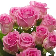 Fresh Rose Imported Intermediate Bunch 10 Aqua (40cm)