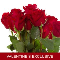 Imported Platinum Fresh Rose Bunch 10 Madame Red (60cm) VAL