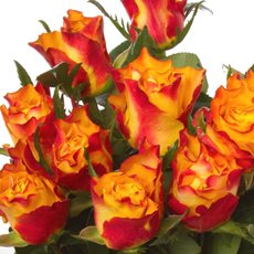 Imported Premium A Fresh Rose Bunched 10 Down Town (50cm)